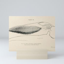 W Sidney Berridge - A Book of Whales (1900) - Figure 18: Head of Balaenoptera, or Balene Whale Mini Art Print