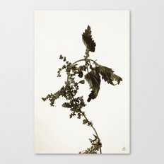 Florales · plant end 6 Canvas Print