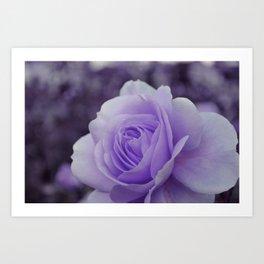 Lavender Rose 2 Art Print