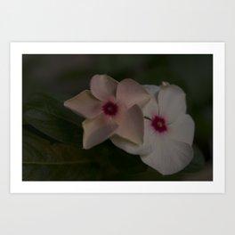 Flower Duo II Art Print