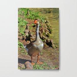 Graylag Goose Metal Print