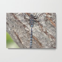 blue dragonfly on wood Metal Print
