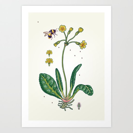 yellow cowslip and bee Art Print