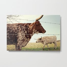 Texas Longhorn Cattle Metal Print