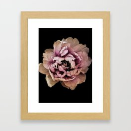 Lush Peony, Nobility And Honour Framed Art Print