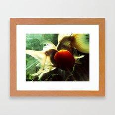 金鱼二 Framed Art Print
