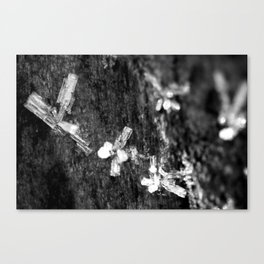 Ice Crystals. Canvas Print