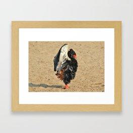 Bateleur Eagle - Anger Management Framed Art Print