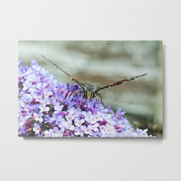 Butterfly I Metal Print