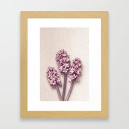 Three Pink Hyacinths Framed Art Print