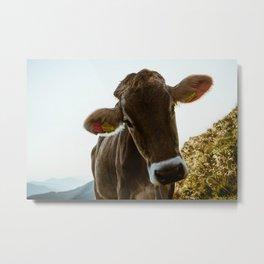 Alpen Cow Metal Print