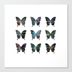 Butterfly collection usa o4 Canvas Print