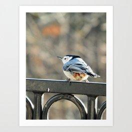 Curlicue bird Art Print
