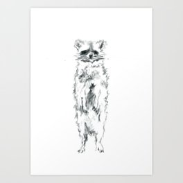 Wild Racoon Art Print