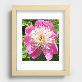Pretty in Pink Peony Recessed Framed Print