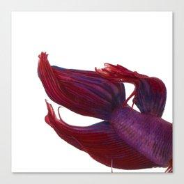 Betta Mermaid Canvas Print