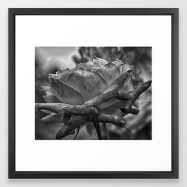 Silk Curl Framed Art Print