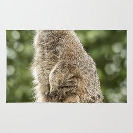 Slender Tailed Meerkat Rug
