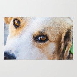Portrait of a lovely stray dog Rug