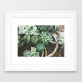 Botanical Gardens - Succulent #625 Framed Art Print