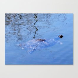 PAINTED TURTLE CAME OUT FOR SPRING BREAK Canvas Print