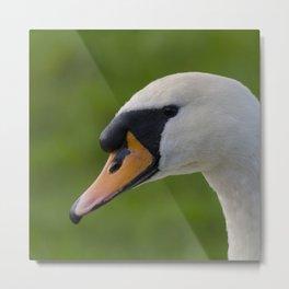 Mute swan pen Metal Print