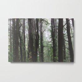 Forest Trail XXXIX Metal Print