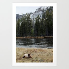 Elk in Yellowstone Art Print