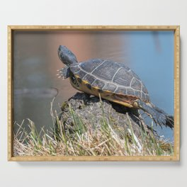 cute turtles rest at sun on pond Serving Tray