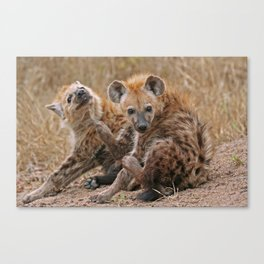 Young hyenas, Africa wildlife Canvas Print