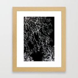 Birch. tree leaves. nature, graphic art Framed Art Print