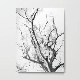Trees 02 Metal Print