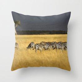 Zebra in Afternoon Light Throw Pillow