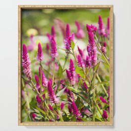 Colorful Celosia Serving Tray
