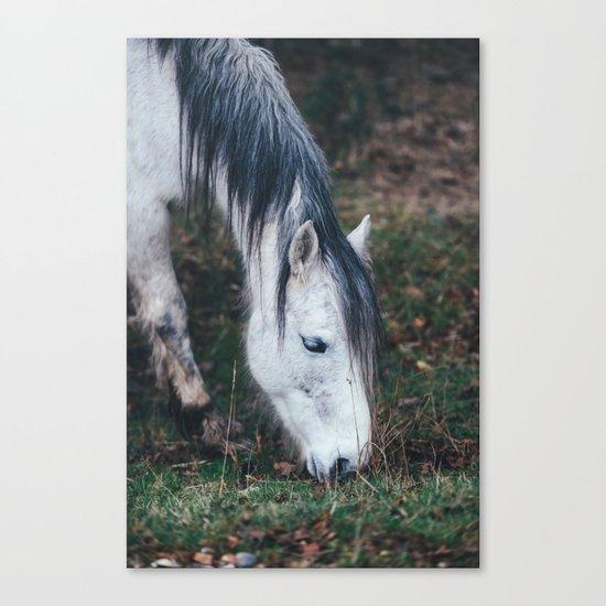 Gentle horse Canvas Print