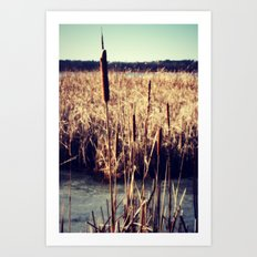 Cattails Art Print