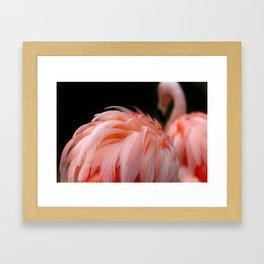 Flamingo Feather Framed Art Print