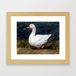 Goose in Split, Croatia Framed Art Print