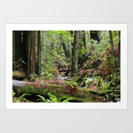 Peaceful Redwood Forest Scene Art Print