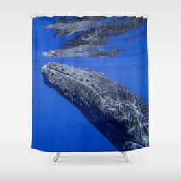 Underwater Humpbacks 13 Shower Curtain