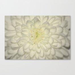 White Flower Canvas Print