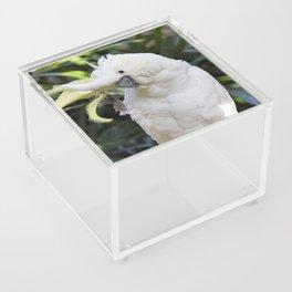 Sulfur-Crested Cockatoo Salutes the Photographer Acrylic Box