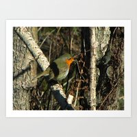 robin Art Prints featuring robin by giol's by gianalberto oliva