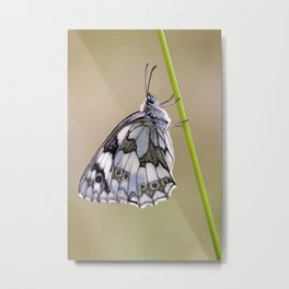 Marbled White Butterfly On Grass Stem Metal Print