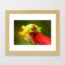 Red eye Frog Framed Art Print