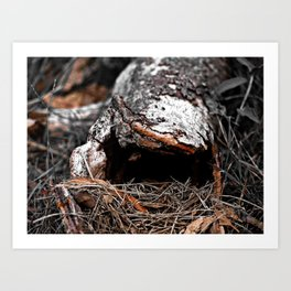 natural abstract Art Print