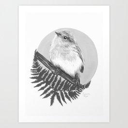 Eastern Robin Art Print