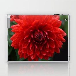 Fresh Rain Drops - Red Dahlia Laptop & iPad Skin