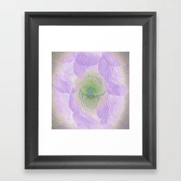 Lilac Rose Framed Art Print