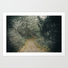 Autumn Path Through the Woods Art Print